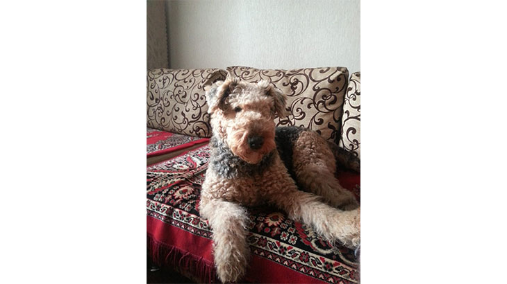 Моя собака Антония