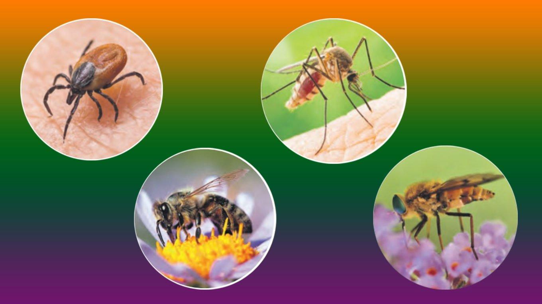 Что делать при укусах насекомых. Укусы клещей, комаров, пчёл, оводов, слепней и мушек