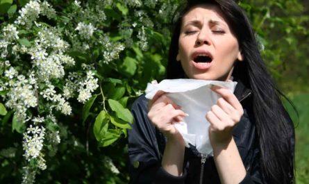 Аллергия на пыльцу. Памятка аллергика: календарь цветения на весну